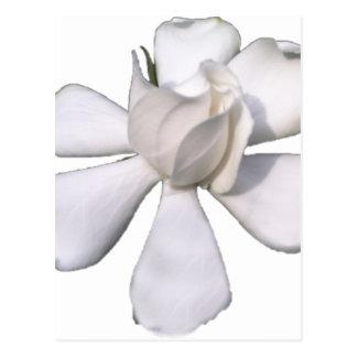 White Gardenia Bud 201711g Postcard