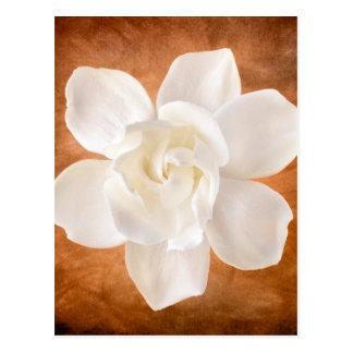 White Gardenia Flower Blossom Floral Postcard