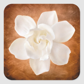 White Gardenia Flower Blossom Floral Square Sticker