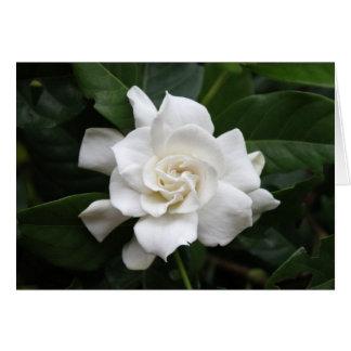 White gardenia flower card