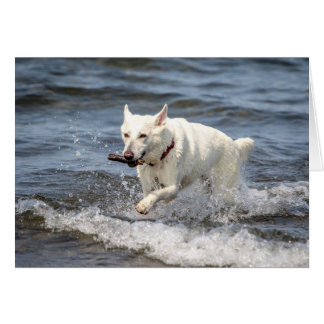 White German Shepard on Lake George Card