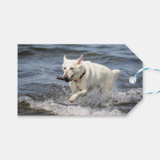 White German Shepard on Lake George Gift Tags