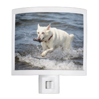 White German Shepard on Lake George Night Light