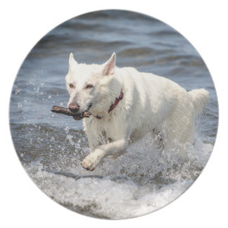 White German Shepard on Lake George Plate
