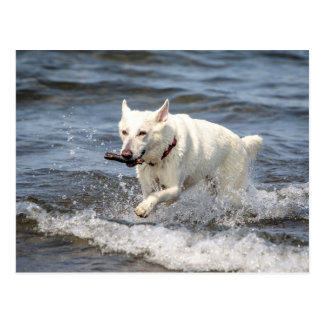 White German Shepard on Lake George Postcard
