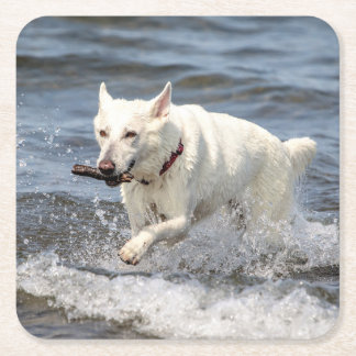 White German Shepard on Lake George Square Paper Coaster