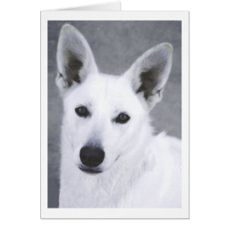 White German Shepherd Dog Card