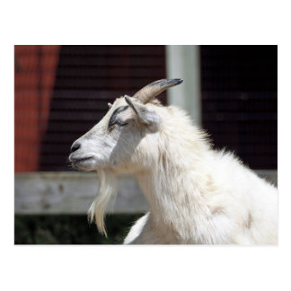 White Goat 2112 Postcard