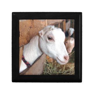 White Goat Gift Box