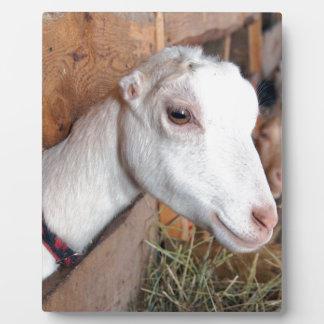 White Goat Plaque