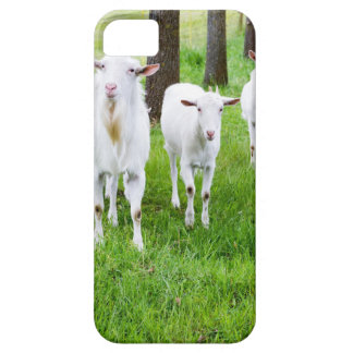 White goats on grass with tree trunks case for the iPhone 5