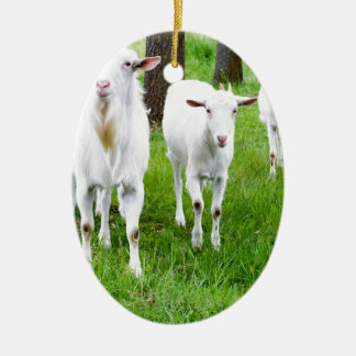 White goats on grass with tree trunks ceramic oval ornament