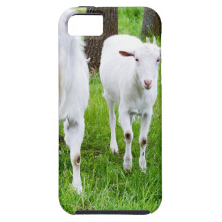 White goats on grass with tree trunks iPhone 5 covers