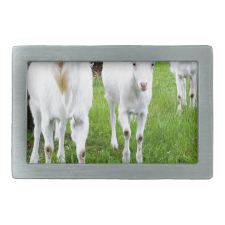 White goats on grass with tree trunks rectangular belt buckle