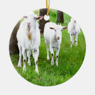 White goats on grass with tree trunks round ceramic ornament
