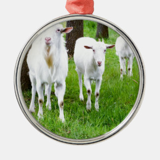 White goats on grass with tree trunks Silver-Colored round ornament