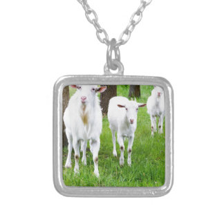 White goats on grass with tree trunks silver plated necklace