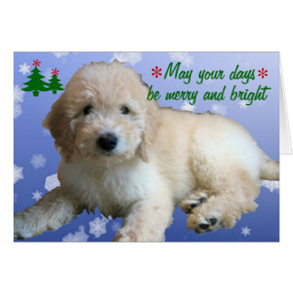 White Golden Doodle Christmas Holiday Card