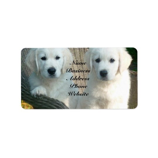 White Golden Retriever Dogs Sitting in Fibre Chair Label