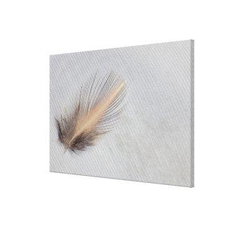 White Goose Feather Still Life Canvas Print