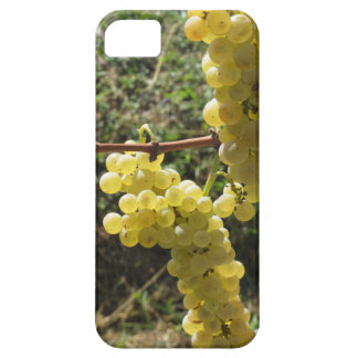White grapes on the vine . Tuscany, Italy Case For The iPhone 5