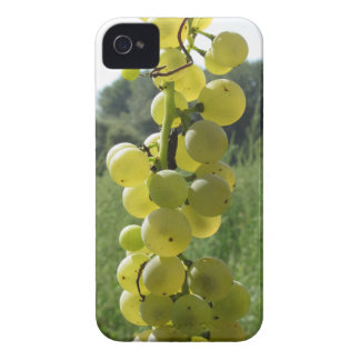White grapes on the vine . Tuscany, Italy Case-Mate iPhone 4 Case