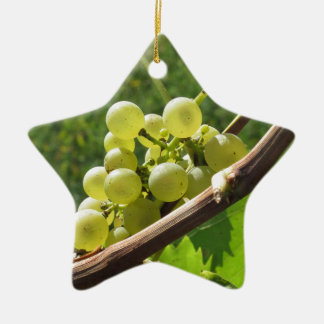 White grapes on the vine . Tuscany, Italy Ceramic Star Ornament