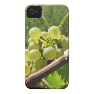 White grapes on the vine . Tuscany, Italy iPhone 4 Case