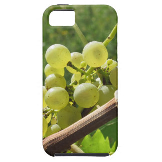 White grapes on the vine . Tuscany, Italy iPhone 5 Covers
