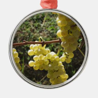 White grapes on the vine . Tuscany, Italy Silver-Colored Round Ornament