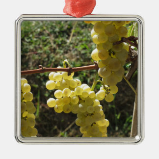 White grapes on the vine . Tuscany, Italy Silver-Colored Square Ornament