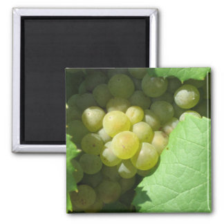 White grapes square magnet