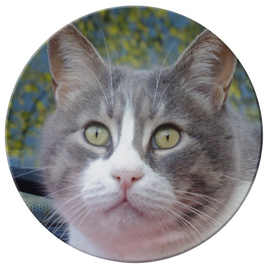 "White/Grey Cat 10.75"" Decorative Porcelain Plate"