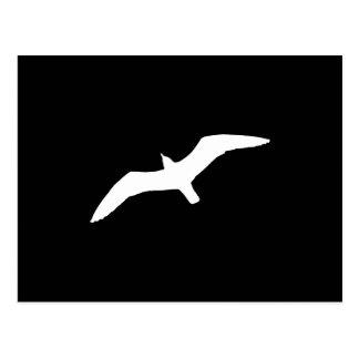 White Gull Postcard