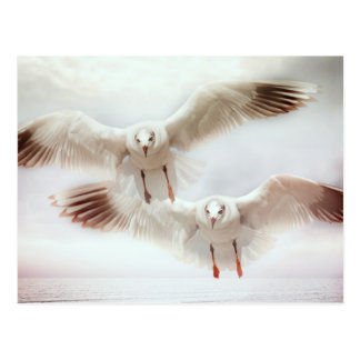 White gulls in flight postcard
