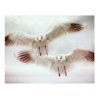 White gulls in flight postcard