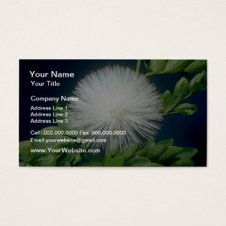 white Haele lehua (Calliandra inaequilatera) flowe Business Card
