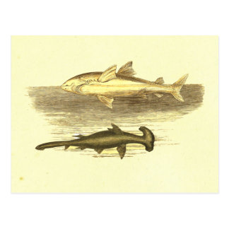 White & Hammer Head Shark Vintage Lithograph Postcard