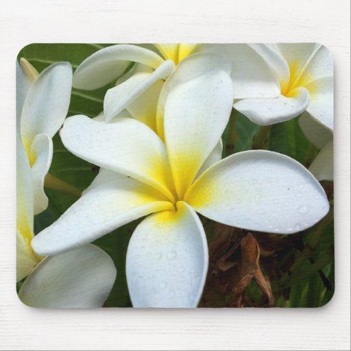 White Hawaii Plumeria Flower Mouse Pad