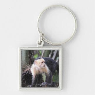 White-headed capuchin, Cebus capucinus. Playa Keychain