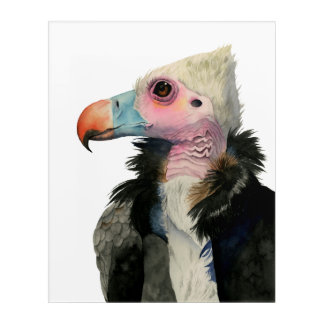 White-Headed Vulture Watercolor Painting Acrylic Wall Art