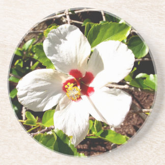 White Hibiscus Coaster