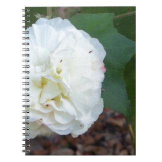 white hibiscus mutabilis flower notebook