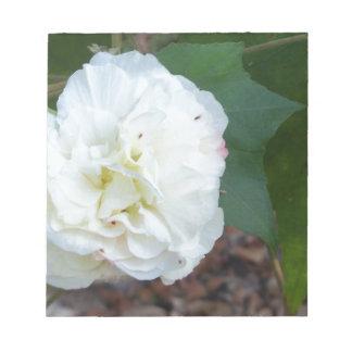 white hibiscus mutabilis flower notepad