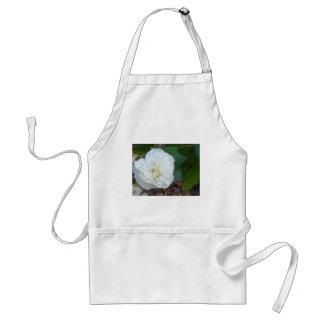 white hibiscus mutabilis flower standard apron