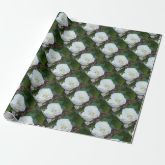 white hibiscus mutabilis flower wrapping paper
