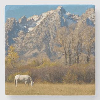 White Horse, autumn, Grand Tetons Stone Coaster