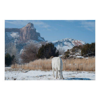 White Horse in a Winter Field Poster