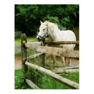 White Horse in Paddock Postcard