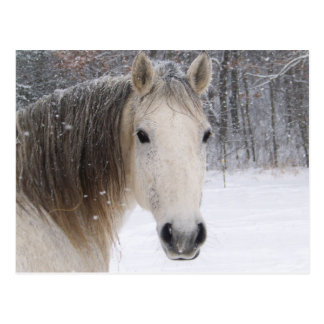 white horse in snow landscape postcard